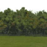 06_extra_fs_trees_scudamore_frontrunner.png thumbnail