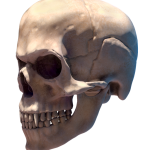 110_extra_head_side_transparent_halloween.png thumbnail