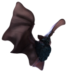 51_extra_bat_frogview_02_color_transparent_halloween.png thumbnail