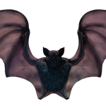 52_extra_bat_front_1_color_transparent_halloween.png thumbnail