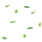 02_extra_leaves_gorillakingdom.png thumbnail