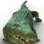 09_character_crocodile_jungle_smashhitbonus.png thumbnail